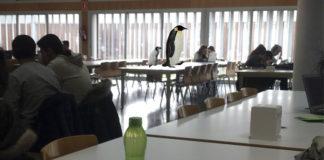 Una familia de pingüinos se muda a vivir a la sala de estudio del CPS