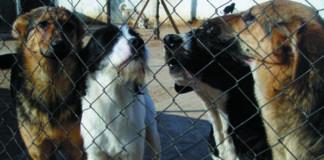Detienen a cuatro perros por exhibicionismo al bailar a la jota, jota y enseñar los huevos