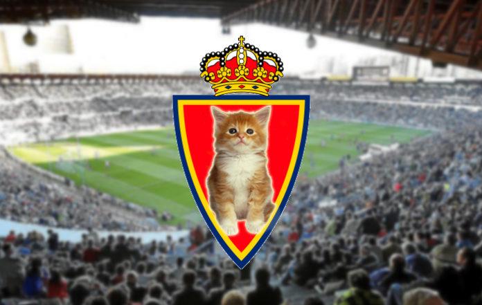 Sustituyen el león del escudo del Real Zaragoza por un inofensivo gatito