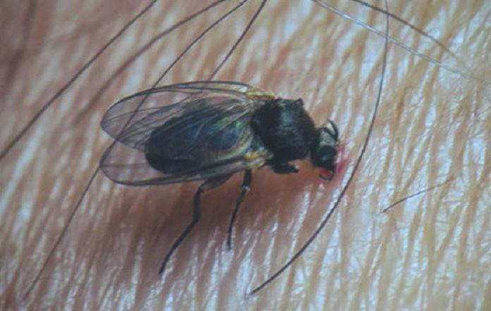 La mosca negra acusa de racismo al Ayuntamiento de Zaragoza