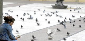 La paloma que representa al Espíritu Santo pasará las vacaciones en la Plaza del Pilar