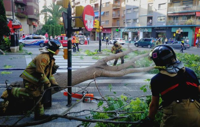 Zaragoza, la ciudad que más leña puede hacer del árbol caído