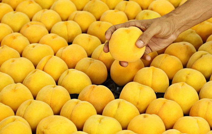 El alcalde de Calanda propone sustituir las uvas por melocotones