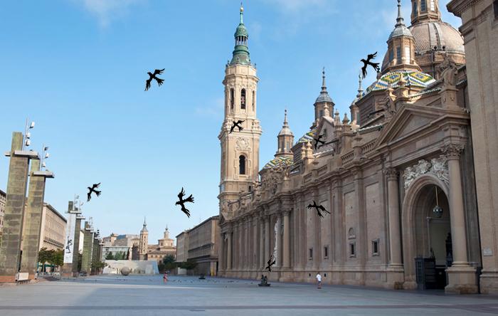 Una bandada de aguiluchos se adueña de la Plaza del Pilar y ataca a las palomas