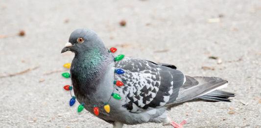 El Ayuntamiento de Zaragoza también iluminará a las palomas durante la Navidad