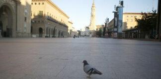 Las palomas de la Plaza del Pilar siguen preguntándose dónde está esa gente que les echaba migas de pan