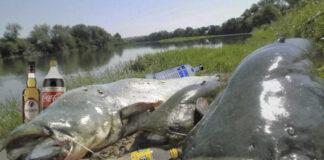Avistan a varios Siluros haciendo botellón en la rivera del Ebro